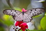 butterfly_park